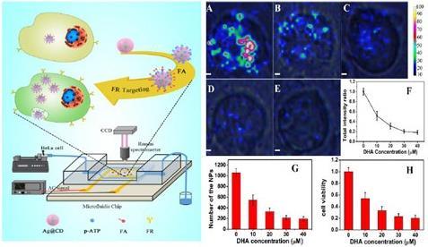 中科院利用表面增强拉曼光谱实现细胞的定量分析和评估